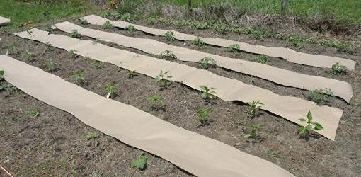 weed-proofing-veggie-garden-3